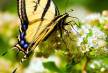 Nature photography / Photos of nature, wildlife, wildflowers, etc. / by Merle Loman