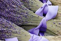 Lady Lavender / by Debbie Dierkes