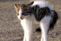 Cats / by Sheri Lemmon