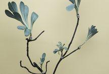 Botanical / pretty plants, fantastic foliage / by Eva L. Stahlschmidt