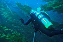 Diver Paradise / by Heather Lopez