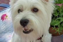 Puppy love! / by Wendee Guyle