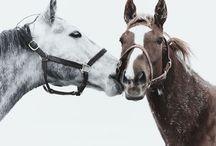 Horses / by Cara Barker Yellott