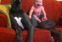 Great Danes :) / by Amanda Slone