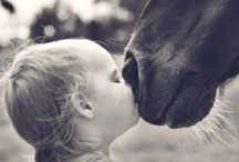 Horses / Horse pictures and horse images / by Tim Johnson