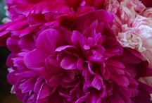 Flora and Fauna... / by Rehana Lewis