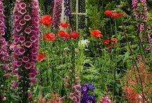 Gardening / by Rachel Knutson