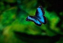 Butterflies / by Jamie Fink