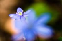 Flowers / by tonikane