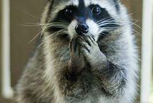 cute animals / by Janet Daniels
