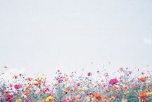 Backgrounds / by Laura Spiers