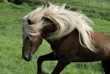For the Love of Horses / Pictures of horses / by Cori Kallem Slater