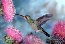 Hummingbirds / by Sandy Parker