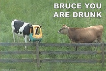 Yea...cows / by Sadie Kennel