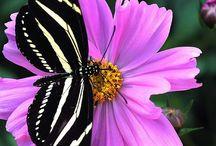 Butterflies / by Lisa Janker Santiago