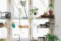 flowers & green living / by Daniela Plattner