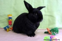 Help for Bunnies and Other Pets / by Theresa Nichols