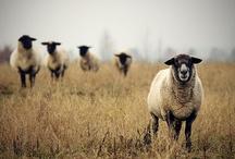 Farm Animals, Farms / by Jan Suessenguth