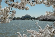 Spring trip to D.C. / by Faon Grandinetti
