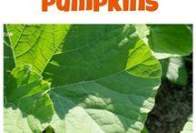 Gardening/organizing tips / by Nancy Bushey Whyte