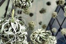 Vertical Gardening / by Red Lotus Gardening Co.