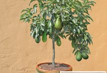 Growing your own Fruit / by Sow and So