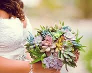 Succulent Bouquet / by Michelle Orem