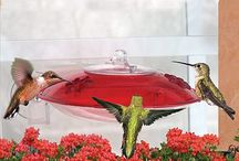 Hummingbirds / by Michelle S
