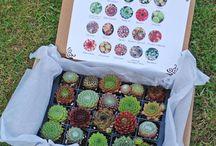 Gifts for Gardeners / by Klehm Arboretum & Botanic Garden
