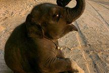 Cute animals / by Linda Meleyal
