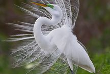 Birds / by Ann P