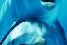 Dolphins and Whales 🐬🐳 / All things dolphins and whales. Amazing animals!!  / by Lynn Curry