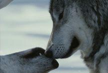 Cute Animals / by Heidi Branch