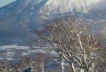 BIG IN JAPAN / Skiing Powder Hokkaido / by Ulf Öman