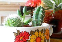 Cactus / by Marie Aquino