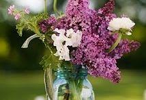 Flowers / by Patty Darrow