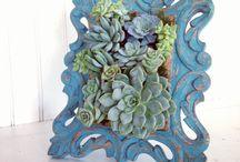 Succulents / by Sarina Preston