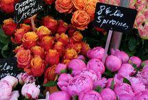 Le pouvoir des fleurs  / by Lo Buchet