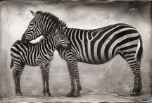 Black & White / anything black and white or white and black.......... / by Katie Berry