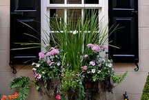 Landscaping/Curb Appeal / by Randi Seritt