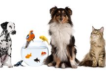 Let's Celebrate Our Furry Friends! / Pet Holidays & Special Days  / by PetCraftStore.com