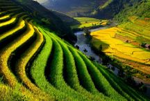 Beauty Places in Vietnam / Vietnam - Hidden beauty / by Duc Vu