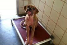 Help Save Corpus Christi Strays / by Corpus Christi Animal Care Services