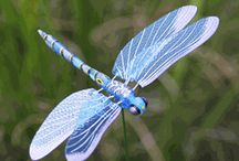 Dragonflies... / by Beth Moore