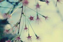 Enchanted Gardens / Inspiration for ongoing project / by Deniz Yildiz