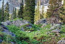Utah / by VedaS.