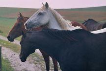 Horses / by Alejandra Ramirez