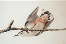 Birds in Art / by Susan Gendron Huotari