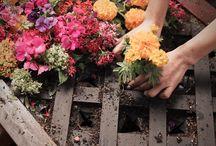 Garden Ideas / by Joelle Miller