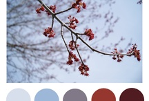 Color inspiration / by Dorthe Pabst